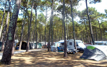 Camping Nature Cap Ferret